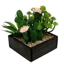 Kaktus & sukkulenter