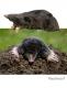 Mole, snegl & Co.