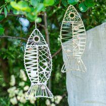 Dekorativ fisk med skal dekoration, maritim dekoration, fisk til at hænge hvid 38cm