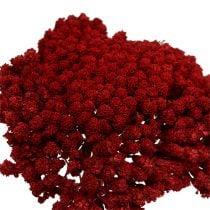 Achillea 1 kg vin rød