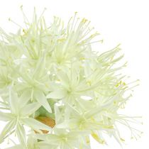 Allium creme hvid L76cm