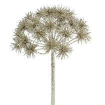 Allium med glimmer champagne Ø18cm L70cm