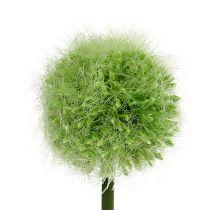 Allium Green L37.5cm 4stk