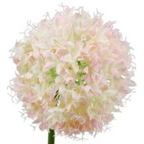 Allium fløde-pink Ø15cm L70cm