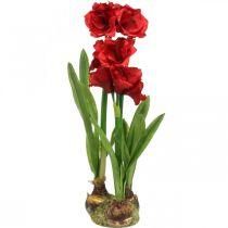 Kunstig amaryllis rød 3 silkeblomster på moskugler H64cm