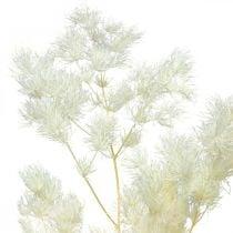 Asparges tør dekoration hvid tørret prydgræs 100g