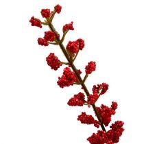 Astilbe bush rød 52 cm
