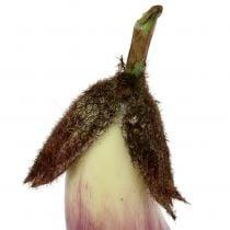 Aubergine 18,5 cm violet