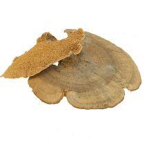 Træsvamp naturlig 1 kg