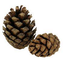 Bjergkogler Fyrkogler 2 kg