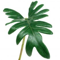 Bladfilodendron 31 cm grøn 12stk