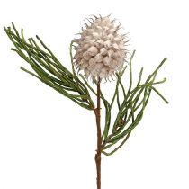 Blomstergren skum grå / grøn 65 cm
