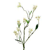 Blomstrende gren hvid L 65cm 1p