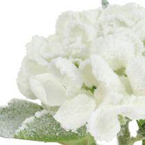 Hortensia hvid sneed 33 cm 4stk