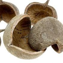Buddha Nuts 8-10cm hvidvasket 10stk