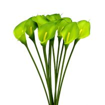 Calla kunstgrøn 8cm L57cm 12stk