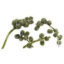 Casurina kegler grøn, vokset 110g