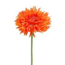 Chrysanthemum bamse 63 cm orange