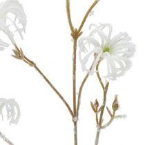 Clematis gren hvid strømmet 62 cm 3stk