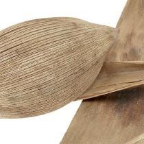 Kokosskaller bleget 25stk