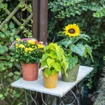 Dekorativ spand frugter gul, orange, grønvasket Ø12,5 cm H12cm sæt med 3