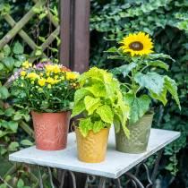 Dekorativ spand frugter gul, orange, grønvasket Ø15cm H14cm sæt med 3