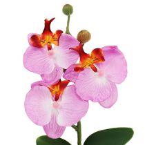 Dekorativ orkidé i en lyserød gryde H29cm