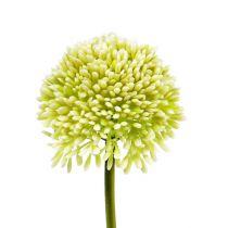 Dekorativ Allium Cream Ø6,5cm L39cm