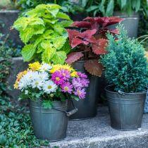 Dekorativ spand med håndtag, havedekoration, plantepotte, metalbeholder Ø16,5cm H15cm