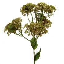 Dekorativ gren stonecrop grøn 58cm