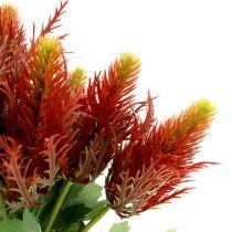 Tistel rødgrøn 20 cm 12stk