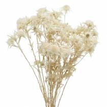 Tørret blomstertistelkvis Bleget 80g