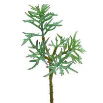 Echeveria 33 cm lysegrøn