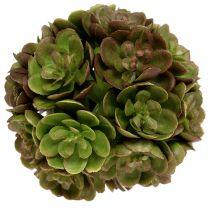 Echeveria kugle 5cm grøn 4stk