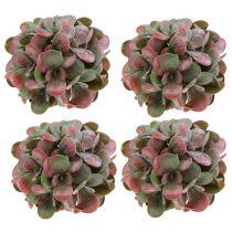 Echeveria-bolde grøn, rød Ø14cm 4stk