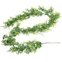 Eucalyptus kransegrøn 150cm