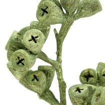 Eucalyptus gren grøn frostet 25stk
