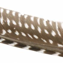 Naturlige fjer 18 - 24 cm 10g