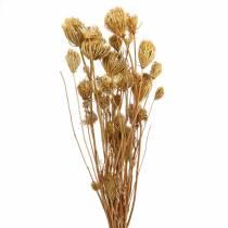 Tørrede blomster fennikel naturlig 100g