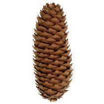 Grankogler naturlige 5 kg fyrretræer