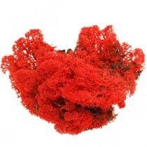 Dekorativ mosrød rensdyrsmose til kunsthåndværk 400g