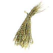Guldrør natur 50stk