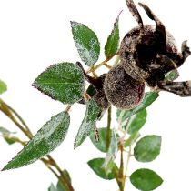 Rose hoftegren L92cm med sne