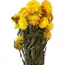 Halmblomst gul tørrede tørrede blomster dekorationsbunke 75g