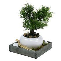 Træbakke grå 14cm x 14cm x 3cm