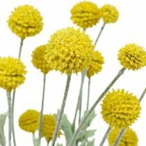 Trommestik gule kunstige Craspedia silkeblomster
