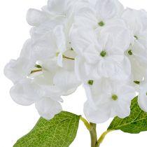 Hortensia 35cm hvid