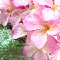 Hortensia pink med sneeffekt 25cm