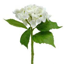 Hortensia 33 cm hvid 1p