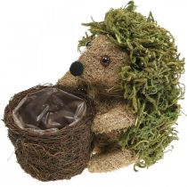 Pindsvin med kurv grøn, efterårsdekoration til plantning, dekorativ plantekurv H24cm Ø9,5cm